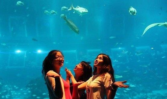 名胜世界的海洋馆1(SEA Aquarium)