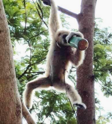 普吉岛的猴子真淘啊!
